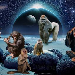 myedit myinspiration monkeys astronauts spaceship