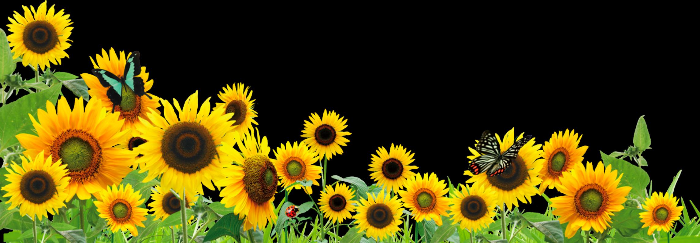 Ftestickers Flowers Sunflowers Butterfly Border