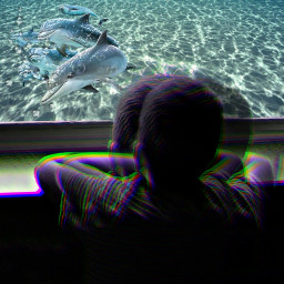 freetoedit aquarium boy dreaming sealife
