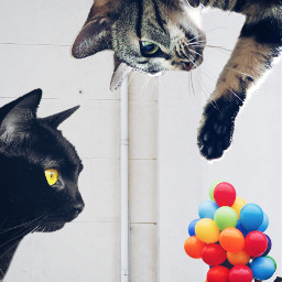 freetoedit cat gigant ballon