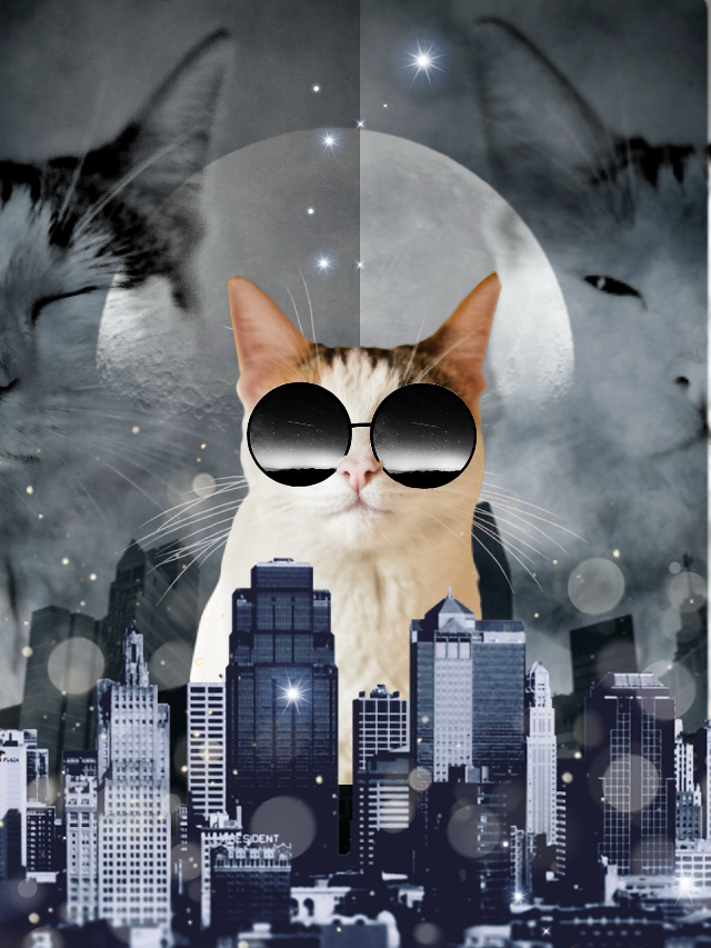 #freetoedit @archangelrapha_ #cats #catday #city
