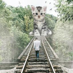 freetoedit millennialfltr mist surreal railroadtracks