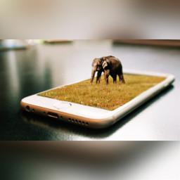 freetoedit phone ircelephant elephant