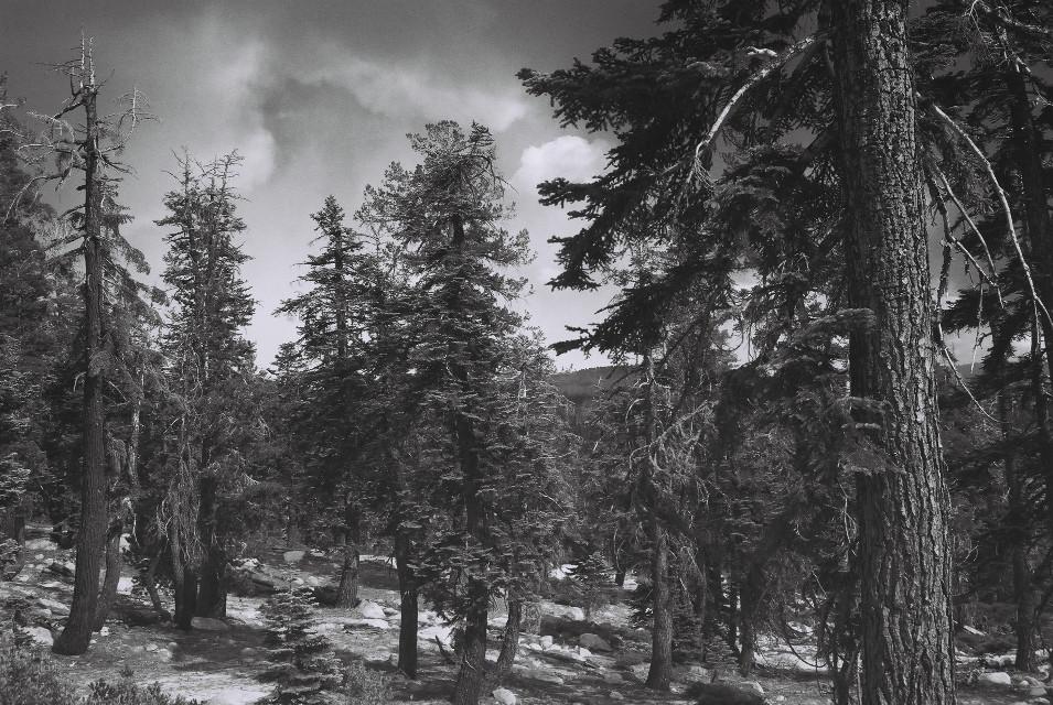 #freetoedit #35mmfilmphotography #analogphotography #35mm #35mmfilm