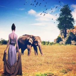 freetoedit ircelephant elephant