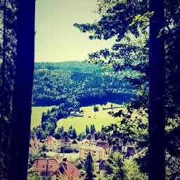 swissvillage viewbetweentrees forest pinetrees