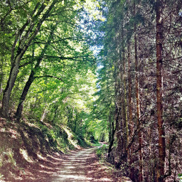 forest greentrees drytrees nature pathway