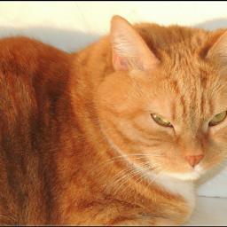 freetoedit cleo pccats cats