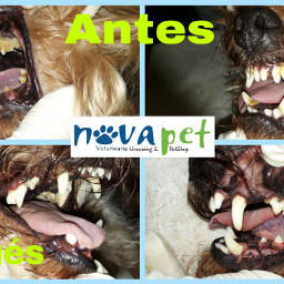 novapetcr limpiezadental dienteslimpios