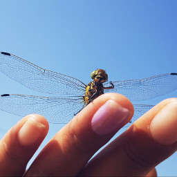 freetoedit dragonfly mypic confidence