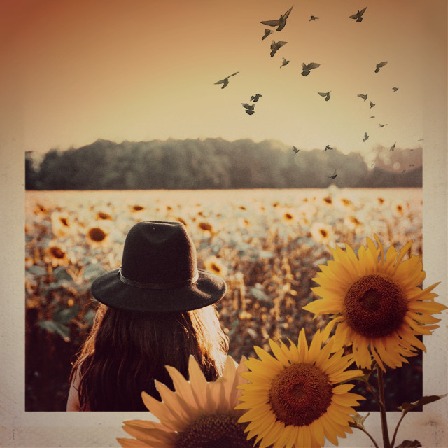 #freetoedit #girl #sunset #sunflowers #flowers #birds