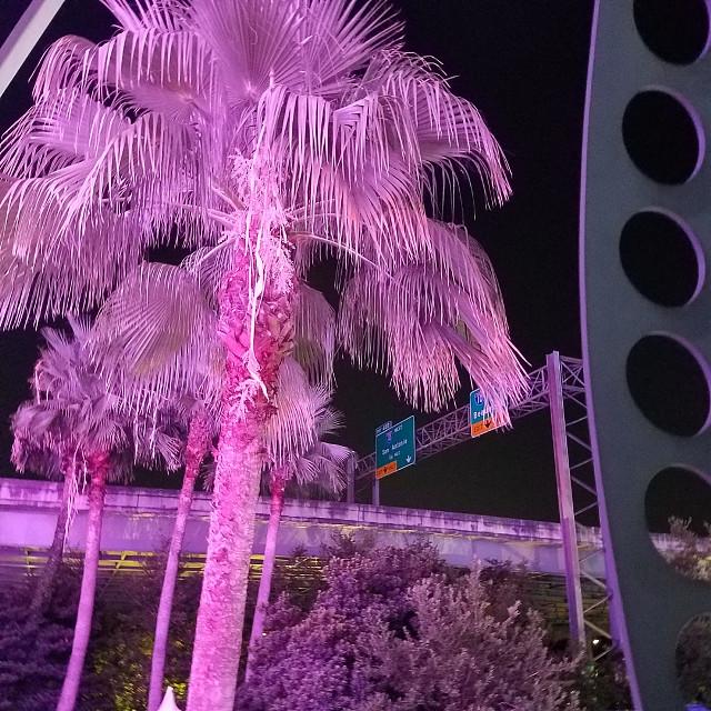 #mypic #HoustonAquarium #palmtree  #HoustonDowntown #nofilter #originalphoto