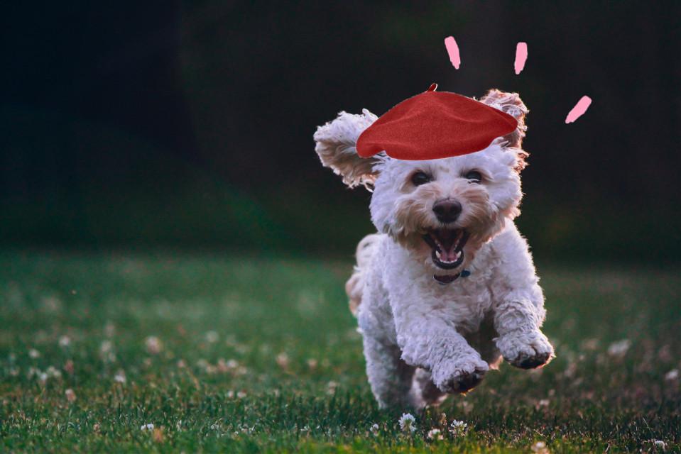#freetoedit #dog #cute #paint