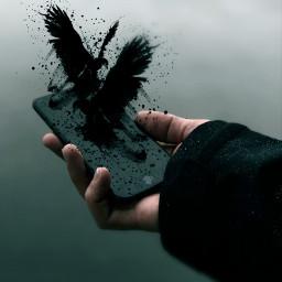 freetoedit remixed surreal hand iphone black birds remixed surreal