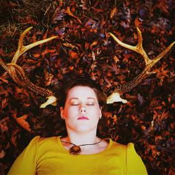 forest deer nature modeling model