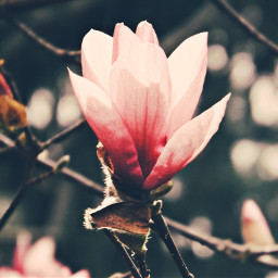 nature photography bloom flower tree