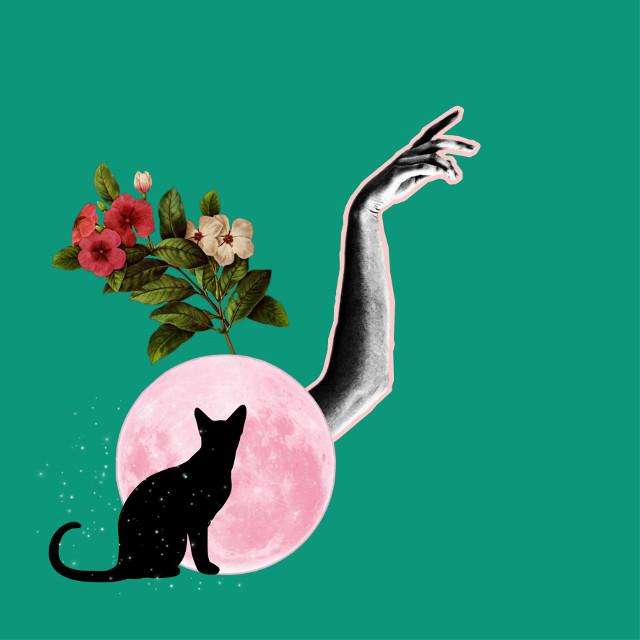 #freetoedit #vangogh #vangoghart #vangoghalive #vangoghstickerremix #vangoghinspired #vangoghmuseum #vangogh #vangoghartcollage #vangogheye #vangoghsky #art #panting #oil pantings #fridaflowercrown #fridakahlo #loveart #madebypicsart #picsartphoto #finearts #selfie #selflove #sunflowerremix #sunflowers #flower #roses #violte