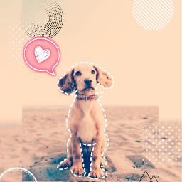 freetoedit ircdogday dogday
