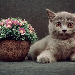 kitten kitty cat adobrable
