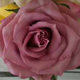 rose romantic casual tierna pcasingleitem