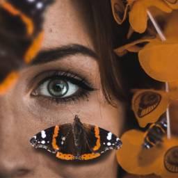 freetoedit eye butterfly edit face