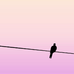 freetoedit mourningdove birdonawire silhouette colorgradient