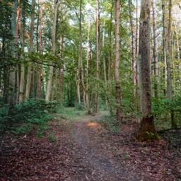 freetoedit road dirtroad dirttrack woodland