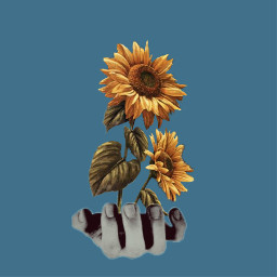 freetoedit sunflowerremix sunflowers sunflowerfield sunflowerphotography