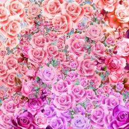 freetoedit background flowersoverlay flowers flower