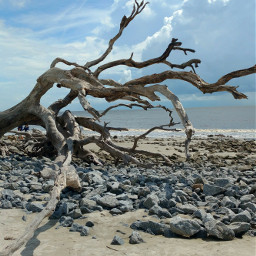 freetoedit september driftwood beach atlantic