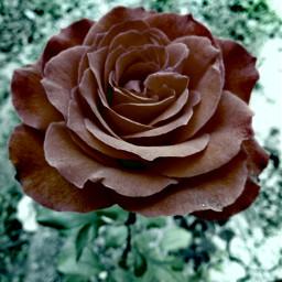 flowers fslc followshoutoutlikecomment tagsforlikesfslc follow pcflowerpower