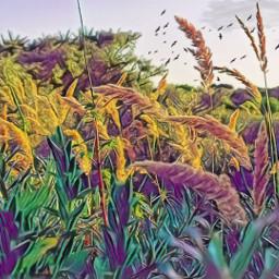 freetoedit rainbowmagiceffect grasses windy