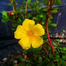 freetoedit nature beauty flower love