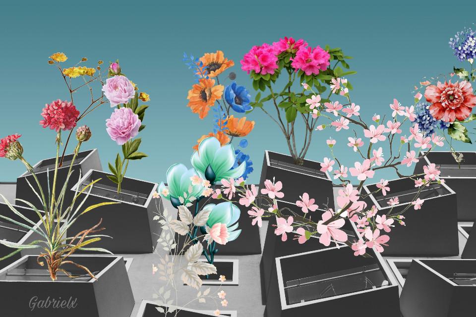 #freetoedit #flowers #flores