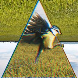 grass grassfield bird glitch freetoedit