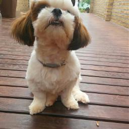 dog mydog myphotography nature cute