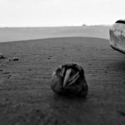 blackandwhite shoe hermitcrab shell beach