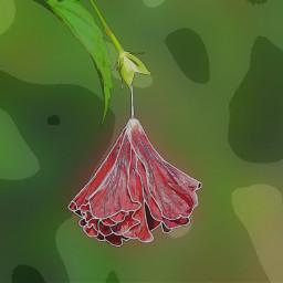freetoedit comiceffect flower poppy redflower ecmybestedit