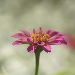 summer flowershot freetoedit