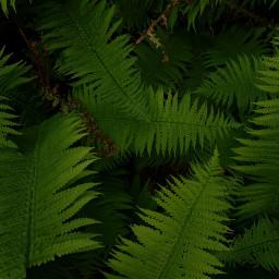 freetoedit green nature naturephotography greenleaf