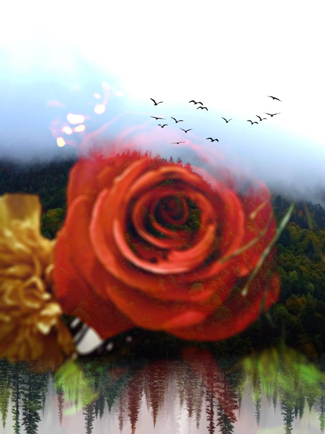 #freetoedit #doubleexposure #overlay #flowers #mountains #trees #woods #rose -- I'm getting glasses!