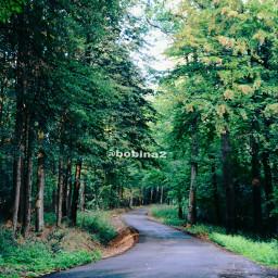 nature forest trees landscape