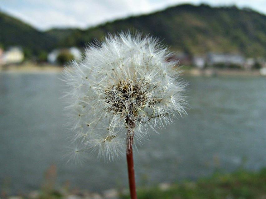 #freetoedit #flower #flowerphotography #landscape