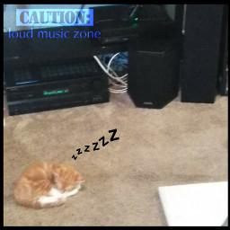 kitty kittysleeping loudmusic musicloud zzz