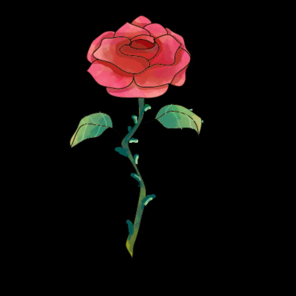 #flor #Rosa #roseflower #rose #flowers #flower #🌷