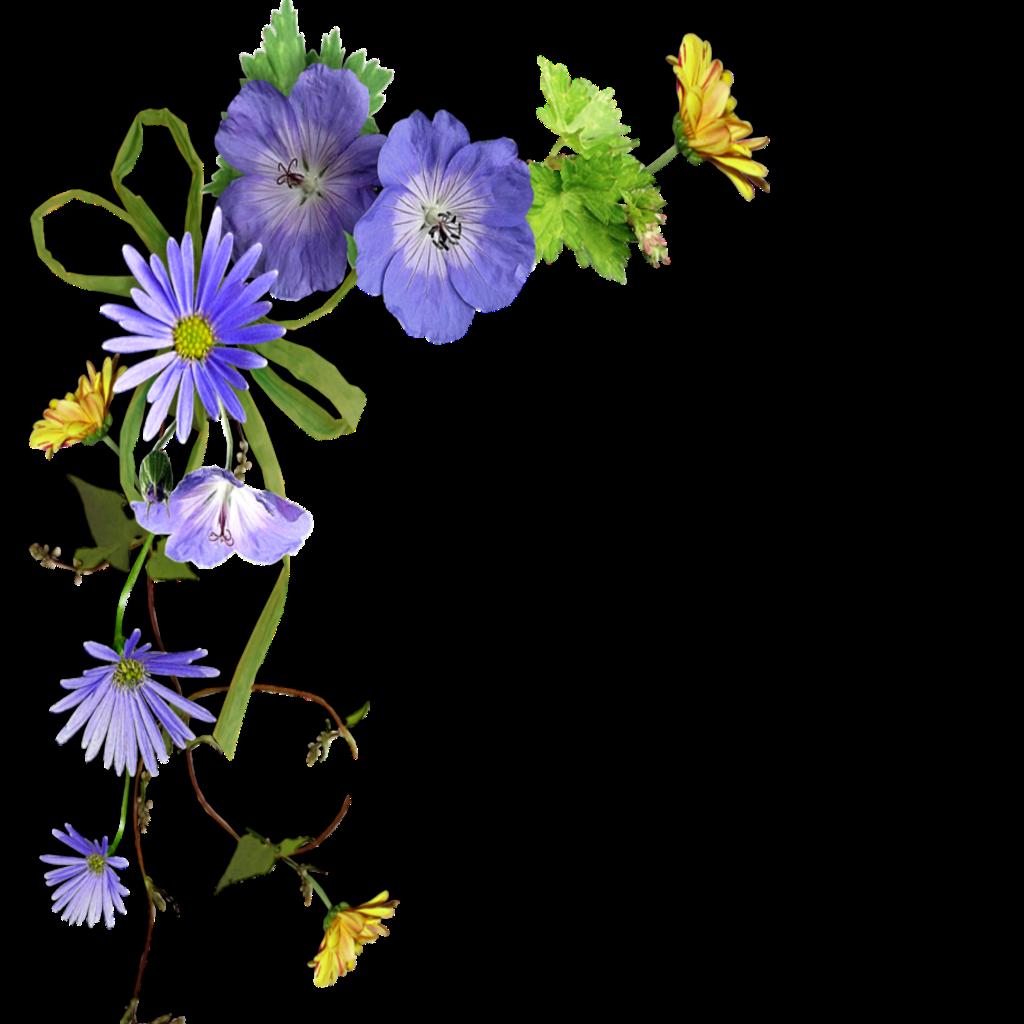 #mq #blue #flowers #flower #garden #nature