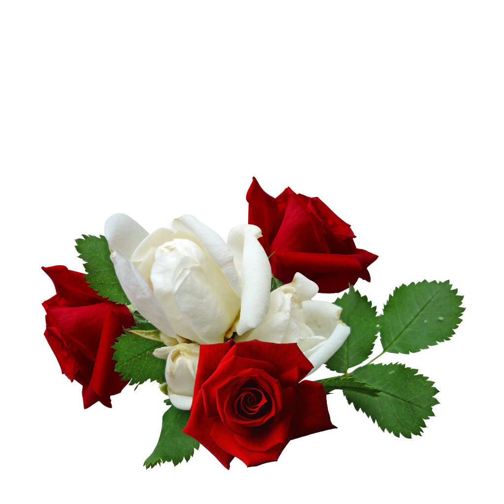 #mq #red #white #roses #flowers
