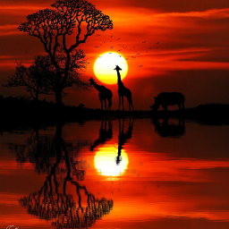 freetoedit africa silueta sol atardecer