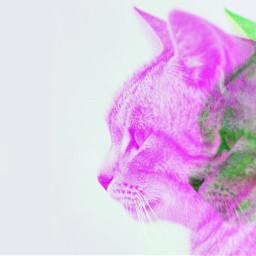 freetoedit cat glitcheffect poparteffect glitch