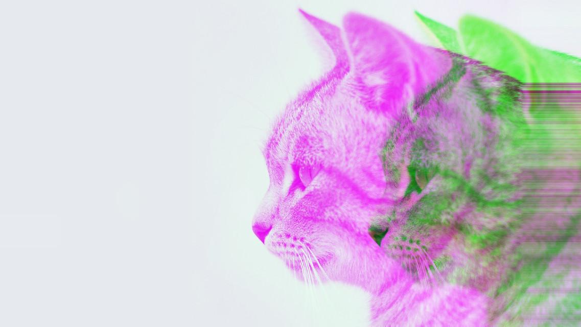 #freetoedit #cat #glitcheffect #poparteffect #glitch #popart Op @helen123321